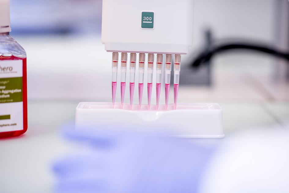Production of 3D cell cultures in the laboratory of InSphero AG in Schlieren, Zurich