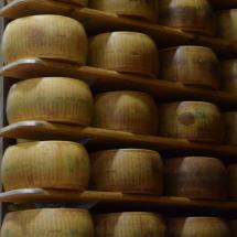 parmesan cheese dairy , cheese factory