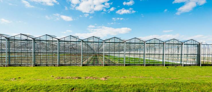 Picture of greenhouses