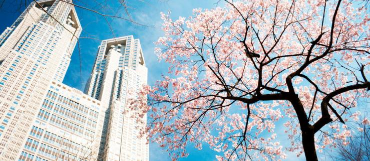View on a skyscaper with a cherry blossom tree in the front.