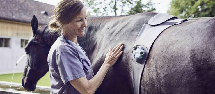 Diagnosis device for horses.